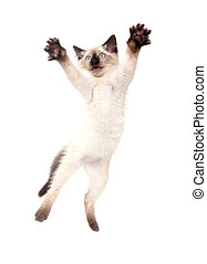 Cute kitten jumping - Cute baby cat jumping and playing on...