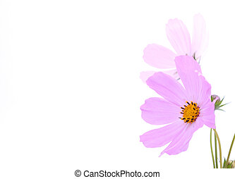 Flower  - Flowers on the white background