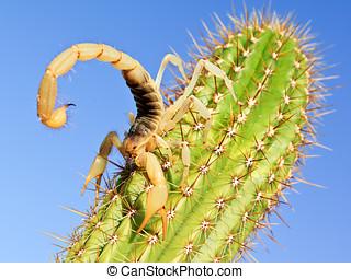 Gigante, cabeludo, escorpião, escalando, cacto