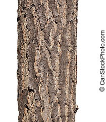 tree bark texture isolated on white background