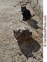 Gray and black cats sitting on the ground