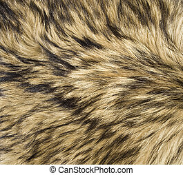 Wolf Fur Texture - The fur of a wild gray wolf to use for a...