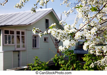 House in the spring blossom garden