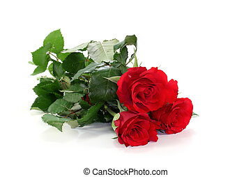 Roses - a bouquet red roses on a white background