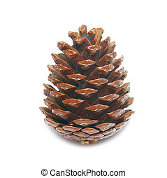 Brown pine cone isolated on white.