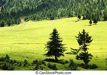 Green meadows - Landscape of green meadows in the forest