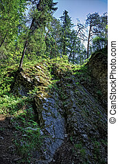 taiga forest - hdri effect photo of deep taiga forest