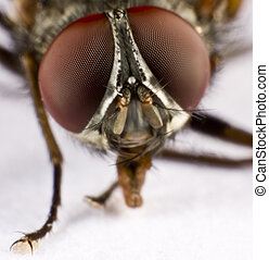 Head of a domestic fly - three - Extreme close-up Head of a...