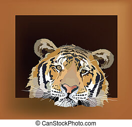 a tiger - tiger color image of a wild animal in a frame