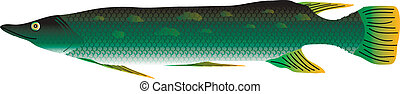 Pike on white background - Pike isolated on white background...