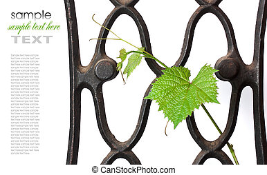 wrought-iron lattice with a vine