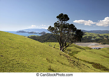 Meadows and hills on the Coromandel Peninsula, North Island,...