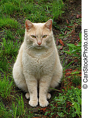 Fat Cat - This grumpy but cute, fat calico cat sits...