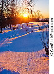 Beautiful sunset in winter forest - Red sunset in winter...