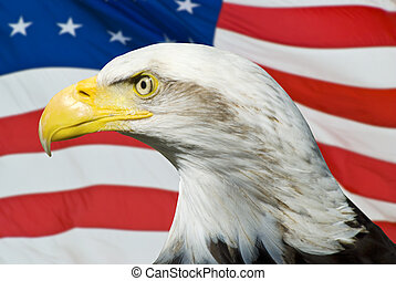 Eagle with an American Flg