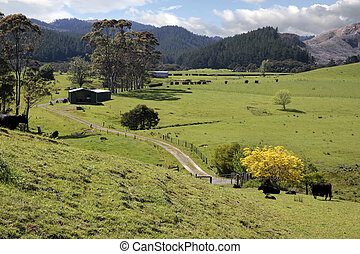 Meadows and mountains on the Coromandel Peninsula, North...