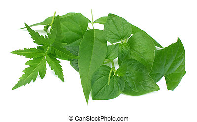 Medicinal herbs oer white background
