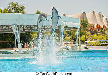 dolphins - two dolphins in a dolphinarium playing and...
