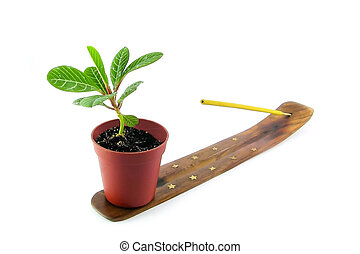 Incense aroma stick in holder and palm in miniature isolated on white background