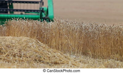 harvesting wheat - blades combine harvester cut ripe ears of...