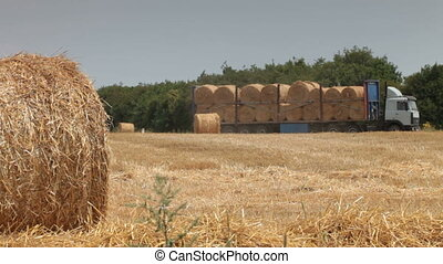 Hay Bales - transportation hay bales from a field by truck