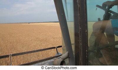 farmer harvested wheat