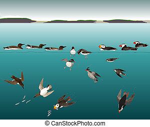 Alcids under the Sea - Murres, Puffins, and Auklets catching...