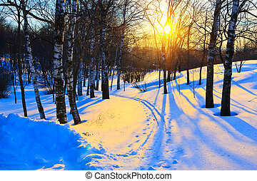 Winter park - Beautiful sunset in a winter park, Russia