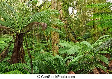 victoria, bosque,  Australia, Lluvia