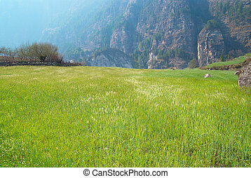 Field of green grass with blue sky