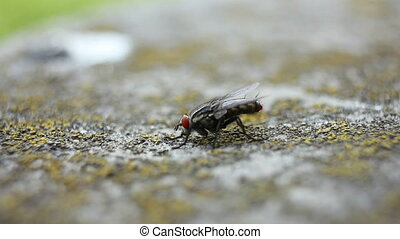 Insect fly