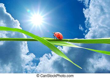 coccinella, dall'aspetto, sole