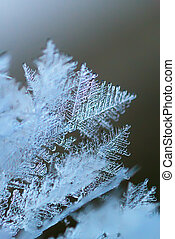 Rime macro. Natural pattern of nature.