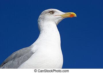 Sea gull portrait. Element of design.