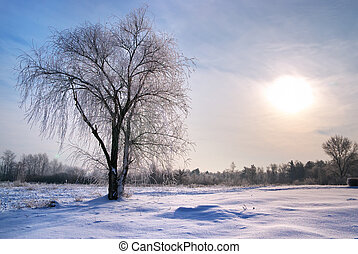 Tree in rime. Composition of nature.