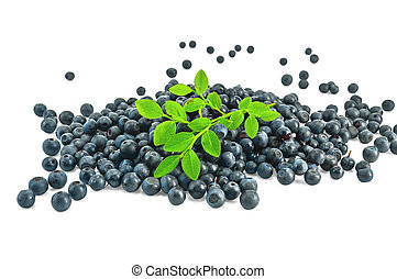 Pile blueberries with a sprig of