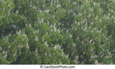 Wind rustling the leaves of floweri - EDIT MULTICAM VIDEO...
