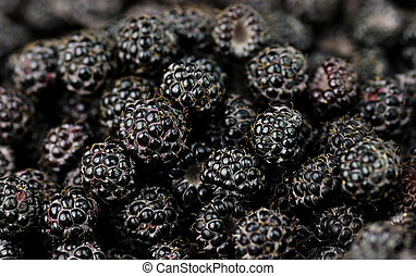 blackberries - fresh blackberries , close up shot for...
