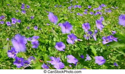 blue flowers on meadow