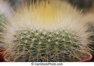 mini cactus closeup in home garden