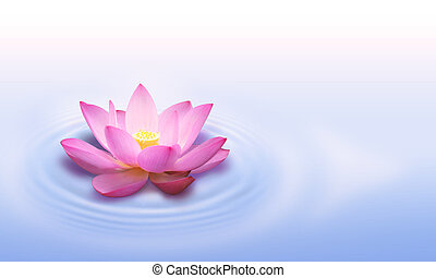 Lotus flower - Beautiful water lotus flower