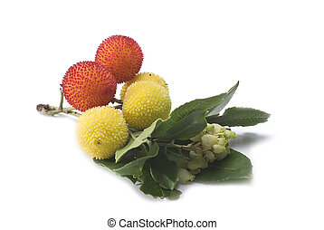 Arbutus branch with fruits. - Fresh arbutus fruits isolated...