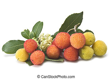 Arbutus on its branch. - Fresh arbutus fruits isolated over...