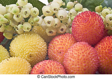 Closeup from some arbutus. - Fresh arbutus fruits isolated...