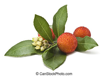 Arbutus, flowers and leaves. - Fresh arbutus fruits isolated...