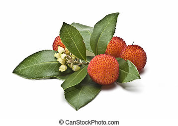 Healthy arbutus - Fresh arbutus fruits isolated over a white...