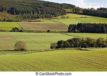 Arable landscape near Drumderfit