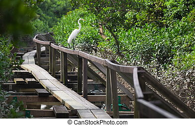 White Heron. Mai Po. Hong Kong. - White Heron on handrail of...