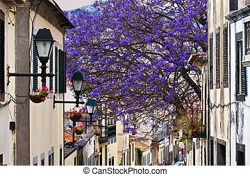 Madeira Funchal - Spring in Funchal