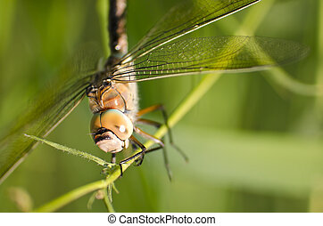 close up of a dragonfly - close up shot of a dragonfly on a...
